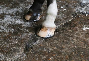 horse hooves hoof by shaun jackson Reading photographer Berkshire